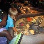 Shedd Aquarium (bus or cab)