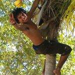 bajando cocos