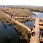 Boardwalks through the wetland