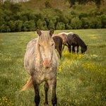 wild horses..