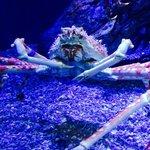 Mr Crab..