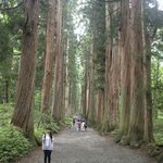 Magnificent cedar trees line the walkway to the shrine
