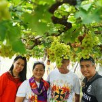 inside the grape plantation @ Lomboy Farms