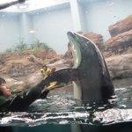 Dolphin feeding time involves some tricks