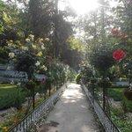 flowers in company garden