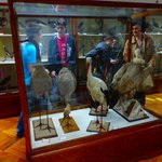 Natural history museum - The Ornithological Collection