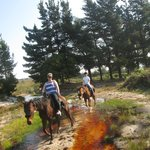 bomb proof horses