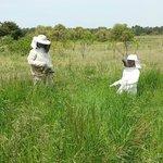 Aventure aux ruchers