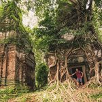 Tree Covered Temples