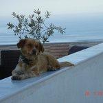 Romeo - Nectarios Dog