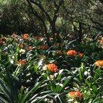 Clivia Garden