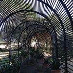 Clivia tunnel