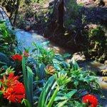 Stream running through garden
