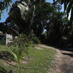 Arrivée Amazon Tarzan Lodge
