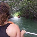 Smalle kunstmatige toegang door de mangrove
