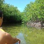 Mangrovebos