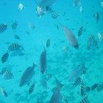 Angel Fish Cov