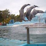 show de los delfines