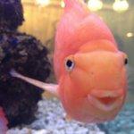 Even the fish are happy!