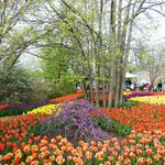 Blooms & Tunes event in Spring/April