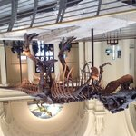 Sue - Tyrannosaurus Rex!