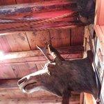 Moose sighting in Cappy's!