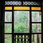Through window to rubber plantation (rear)
