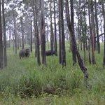 Elephant Sightings - Mom and Calf