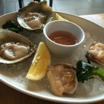 Diamond Clams and Bluff Oysters