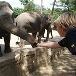Zoo de la Palmyre elephants