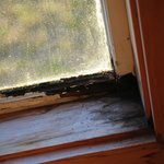 Rot and Mold around windows