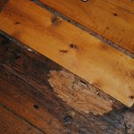 Rotten floor boards