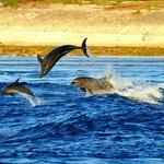 Delfini a Passe de Tiputa