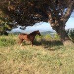 Il cavallo ❤️