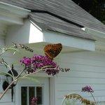 Das Paradies zieht auch Schmetterlinge an