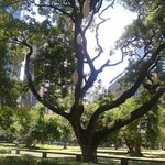 Ayala triangle garden