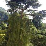 Baumbestand im Hotelgarten
