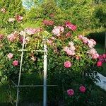 Che rose!!!