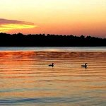 Sunset and loons - view from our dock.