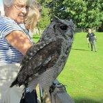 Gizmo the Owl