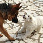 Τα σκυλάκια του ξενώνα