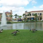 Upscale Shopping and Dining Nearby.