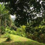 Croydon Plantation