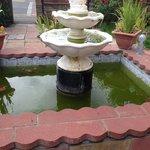 The algae filled fountain
