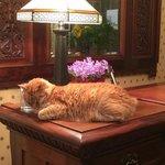Pip,the cat host!