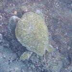 Sea turtles while snorkeling