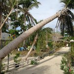 Pathway from beach front to the cottages. The fallen coconut tree is due to typhoon Yolanda.