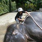 douche d'éléphant