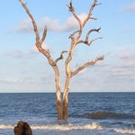 Tree in the water at Hunting Island State Park