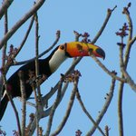 We saw toucans every day on the tree next to our room
